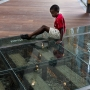 waterloo clearglassflooring boysittingonglass